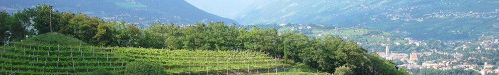 Vineyards along the Marlinger Waalweg in the surroundings of Merano.